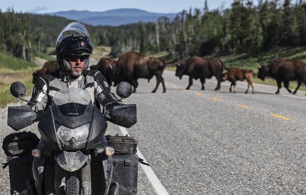 27 - eine von vielen Begegnungen mit Bisons