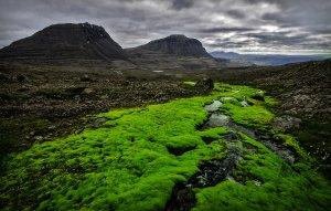 Mooslandschaft in den Nordwest Fjorden